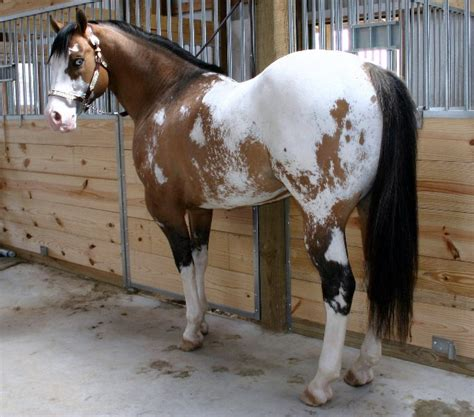 white pattern in horses custom taille schleich et autres page 2