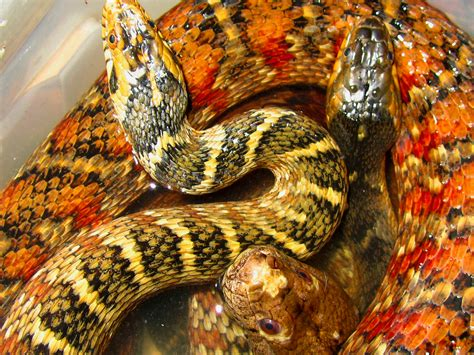 snake in bathtub snake bathtub 28 images snake in a tub photography