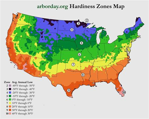 zone map bamboo care and maintenance a guide for growing and controlling bamboo