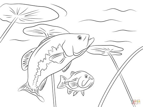 85 printable bass fish coloring pages wonderful