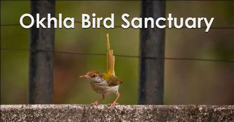 okhla bird sanctuary noida key attractions timings