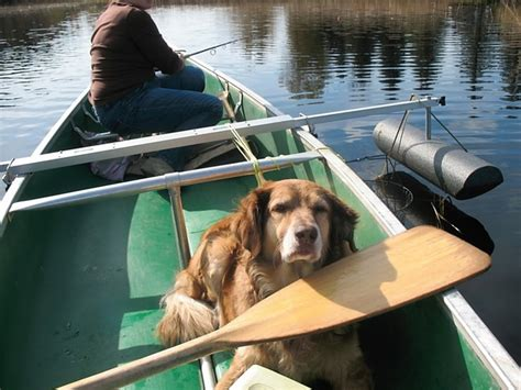 canoeing with dogs canoe canoe and kayak