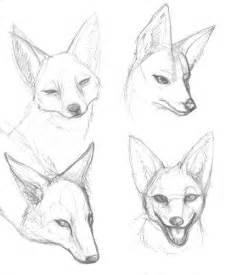 How to draw a jackal jackal y head studies by dani