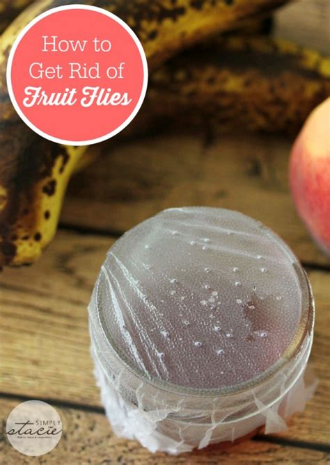 7 Ways To Get Rid Of Fruit Flies by Tips 10 Solutions To Everyday Problems Home