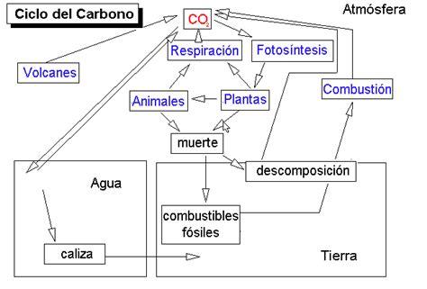 cadenas carbonadas mapa conceptual ciclos biol 243 gicos y de los nutrientes