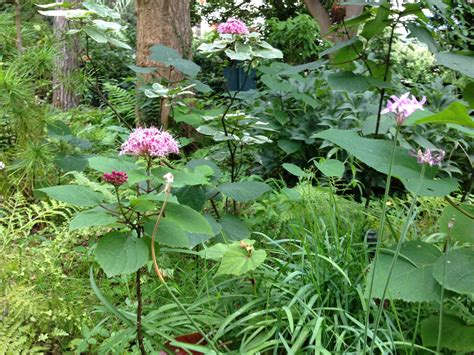 il giardino dei libri opinioni giardini mortella cultura culture per un nuovo punto