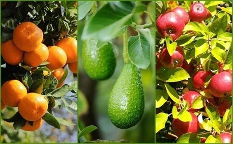 fruit garden 9 secrets to get more fruit from your garden