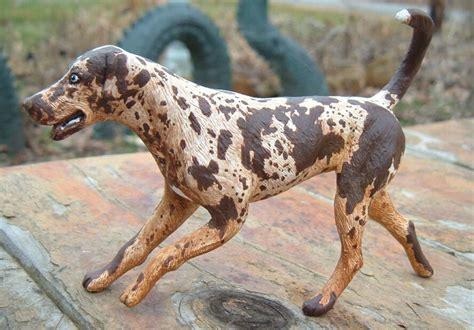 catahoula hound catahoula hound