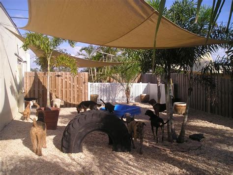 backyards for dogs cool play yard set up for dogs dog scaped yards