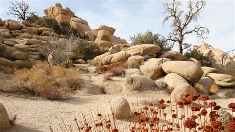 United Airlines Booking the best joshua tree national park vacation packages 2017