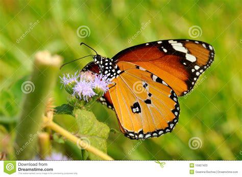 imagenes mariposas libres mariposa al aire libre fotos de archivo imagen 15907403