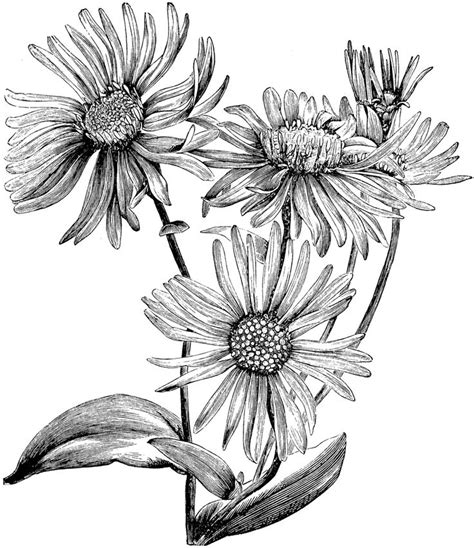 aster tattoo designs 25 best ideas about aster flower tattoos on