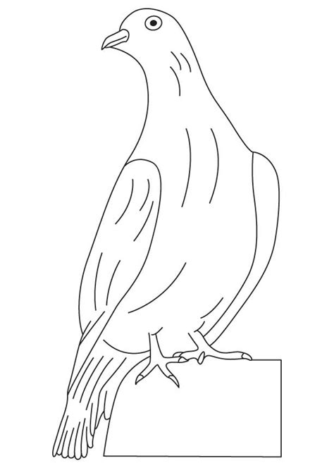 Free Coloring Pages Of Sketch Of Dove Dove Coloring Page
