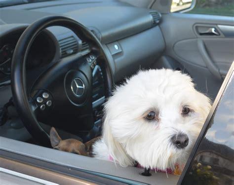 sudsy puppy sudsy puppy hundesalon tiersalon winchester ca vereinigte staaten