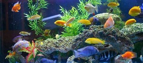 lade per acquario acqua dolce acquari d acqua dolce quali pesci mettere