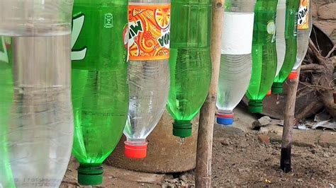 plastic bottle drip water irrigation system  simple