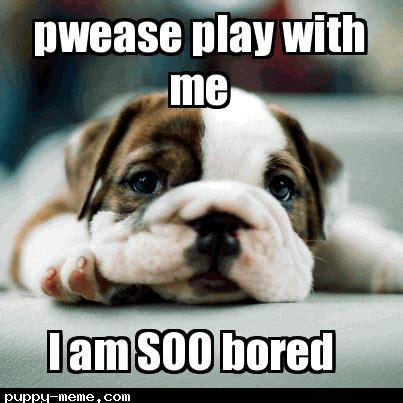 bored puppy bored meme pictures to pin on pinsdaddy