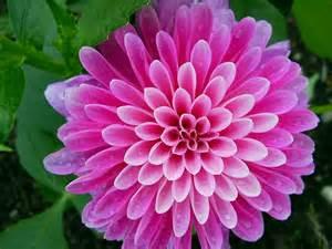 beautiful flower flower picture