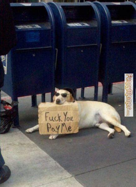 Dog With Glasses Meme - dog memes fuck you pay me funny pinterest dog memes and memes