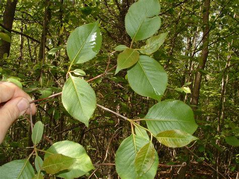 Home Plants Untitled Document Bio Sunyorange Edu