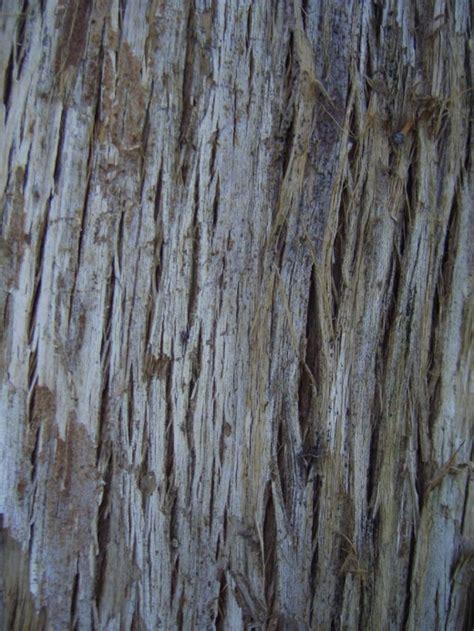 tree bark 20 impressive free high resolution tree bark textures
