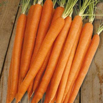 Benih Tanaman Wortel benih wortel sugarsnax f1 25 biji non retail