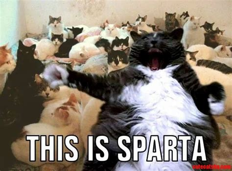 This is sparta cute cats hq free pictures of funny cats and photo of