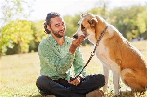 what to give dogs for diarrhea diarrhea in dogs symptoms and remedies