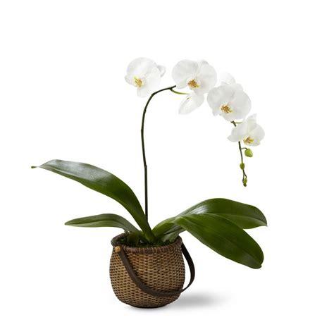 pianta da appartamento piante da appartamento piante appartamento scegliere