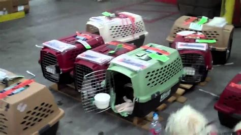 devore dogs fly w from truckdrivers in cargo mike is al