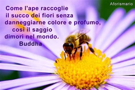 frasi sui fiori aforismario 174 api e miele frasi citazioni e proverbi