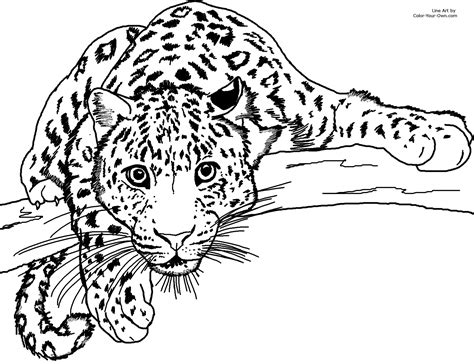 lurking leopard coloring page