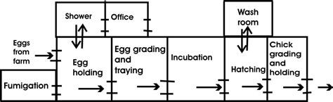 poultry hatchery layout design neotech kenya agribusiness poultry farming hatchery