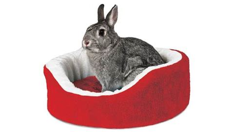 Rabbit Bed Pet Gift Guide The Best Christmas Presents For Dogs And