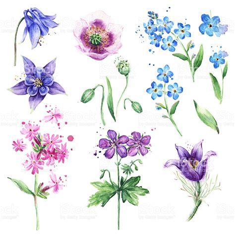 fiori acquerello collezione fiori selvatici porcellana non