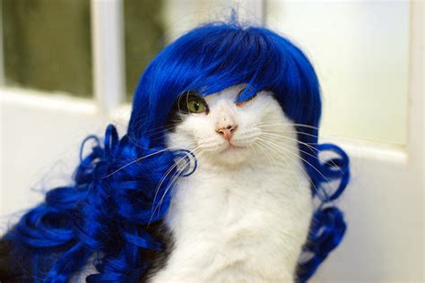 cat wig cats in hats smile catalog