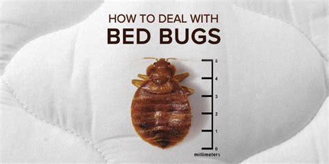bed bugs what to do how to deal with bed bugs at your rental property