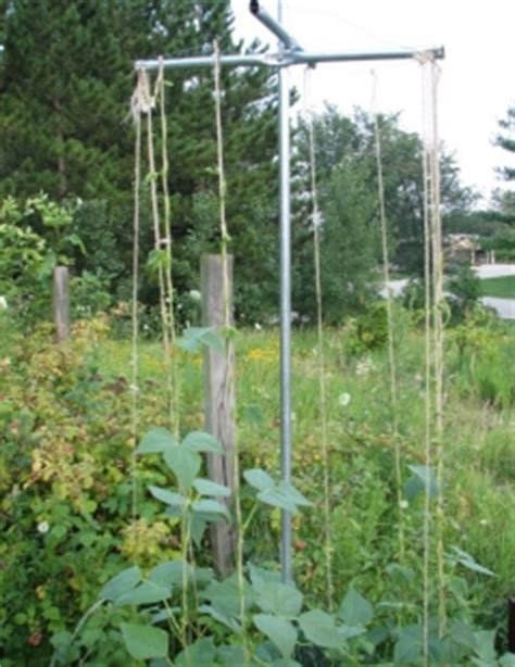 Gardeners Supply Bean Tower Build A Pole Bean Support