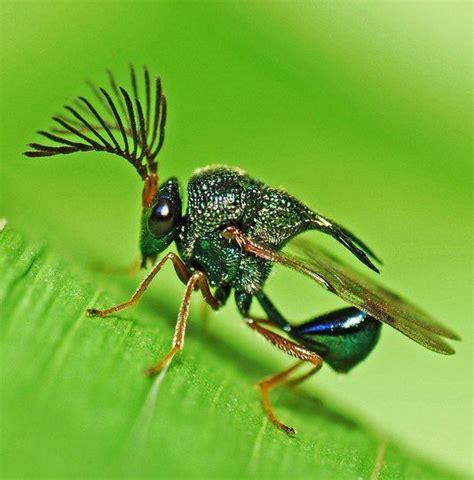 Amazing Beetles 20 most amazing insect photos amazing animal photos