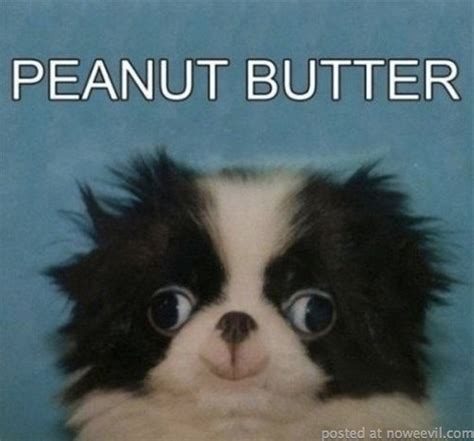 peanut butter for puppies we him with the peanut butter aww