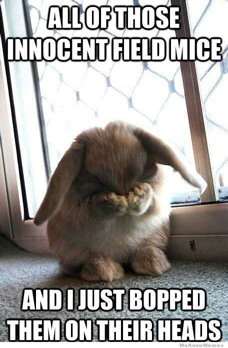 Cute Easter Meme - 1000 images about funny rabbit memes on pinterest
