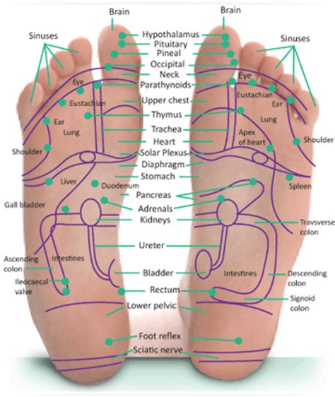 nerve endings of the soul interaction between the mind of god and the mind of through neural synaptic networks books simple foot reflexology new health advisor