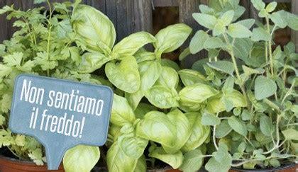 piante in vaso invernali piante aromatiche invernali quali resistono al freddo e