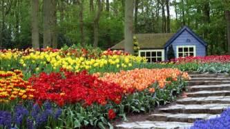 fondos de jardines con flores imagui