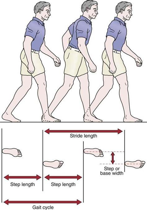 gait pattern types femoral nerve gait applecool info
