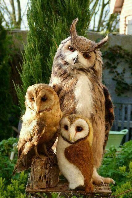 95 Best Owl Images On Animal - 141 best owl images on barn owls animals