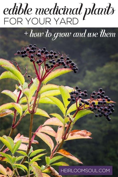 edible plants in your backyard best 25 edible plants ideas on pinterest