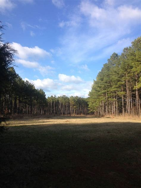 land and timber land and timber sales in ninety six sc paden land and