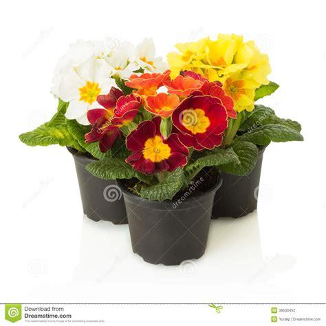 Blumen Im Topf 3326 by Blumen Im Topf Rote Blumen Im Topf Lizenzfreie Stockfotos