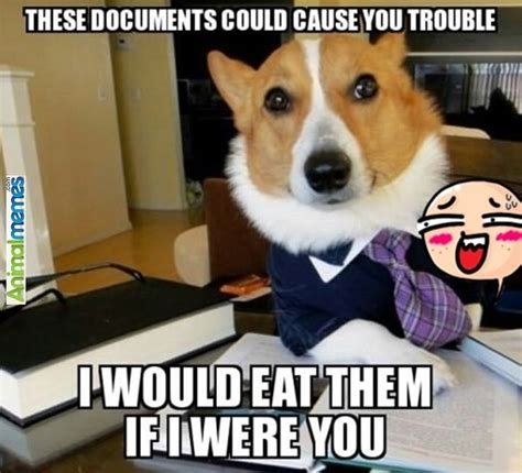 Law Dog Meme - 956 best dog memes images on pinterest dog memes